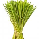 Lemongrass Cymbopogon
