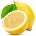 Lemon Citrus × limon