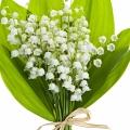 زنبق دره - ادکلن دیور جادور